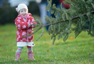Three year old Anú Guilfoyle Mee having a go during the annual Christmas tree throwing championships in Ennis. Photograph by John Kelly.