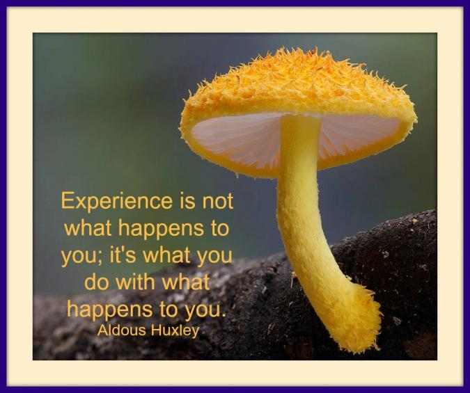 Experience is not what happens to you; it's what you do with what happens to you
