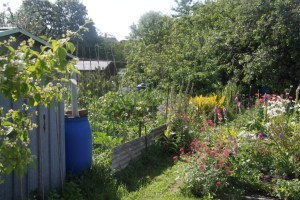 Queens Road Allotments