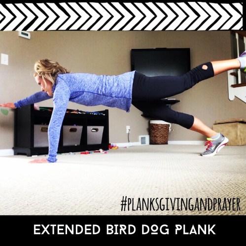 extended bird dog plank : peak313.com