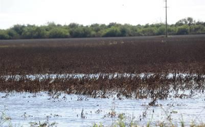 foto jose almeidacampos y cultivos afectados por las inundaciones en l departamento la paz, provincia de entre rios.25-04-2016 - FTP CLARIN - DSC_1221.JPG - Z FTP Almeida - almeida