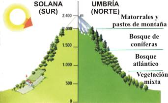 Esquema en el que se muestra cómo se distribuye la vegetación en las montañas