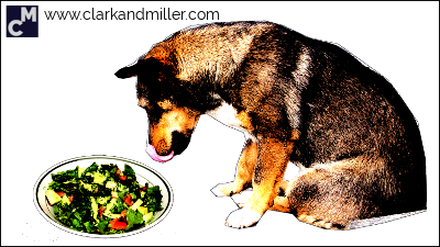 Dog eating a salad