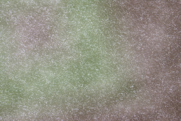 Light grey-green background with a white speckled pattern