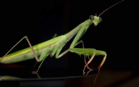 The Praying Mantis utilizes Speed, Suprise, Strenght, and the Violence of Action.