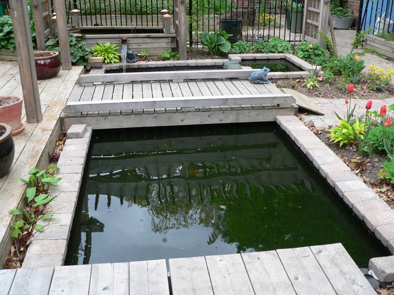Building Above Ground Fish Pond