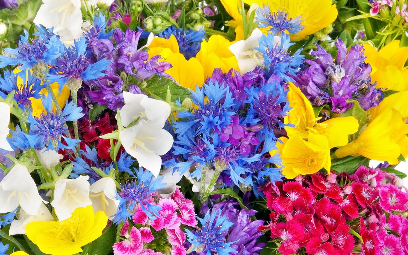 clark flower and gift