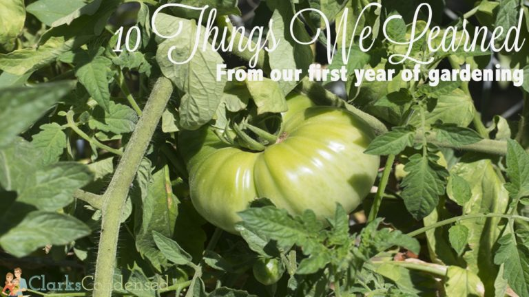 10 Things we Learned During our First Year of Gardening - successes, failures, and how you can learn from our mistakes!