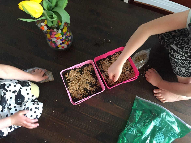 Children growing grass in DIY Easter baskets