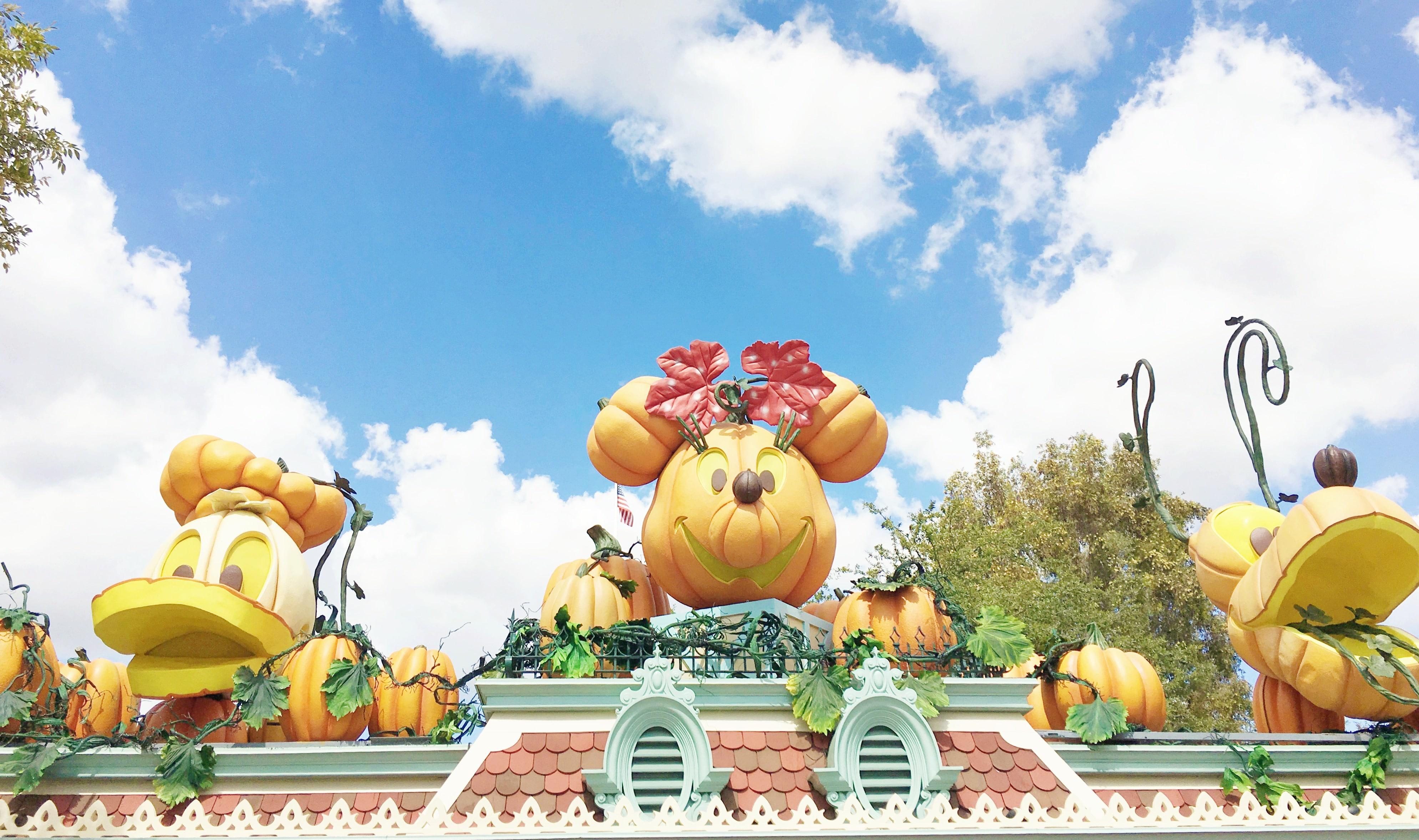 minnie pumpkin at disneyland