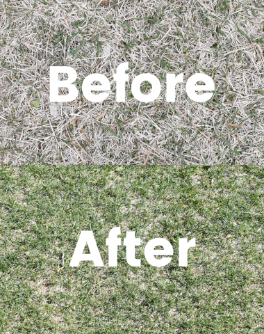 before and after of sunday lawn care