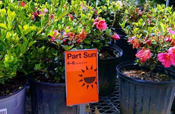 part sun plants