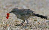 "Native Plants in Urban Yards Offer Birds ""Mini-Refuges ..."