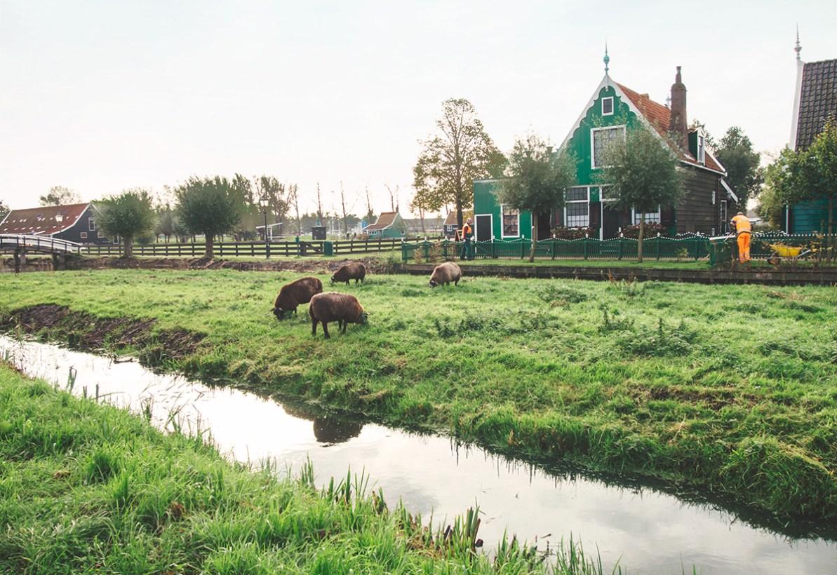 Amsterdam: Mills & Greenery (Day 3, Pt-1)