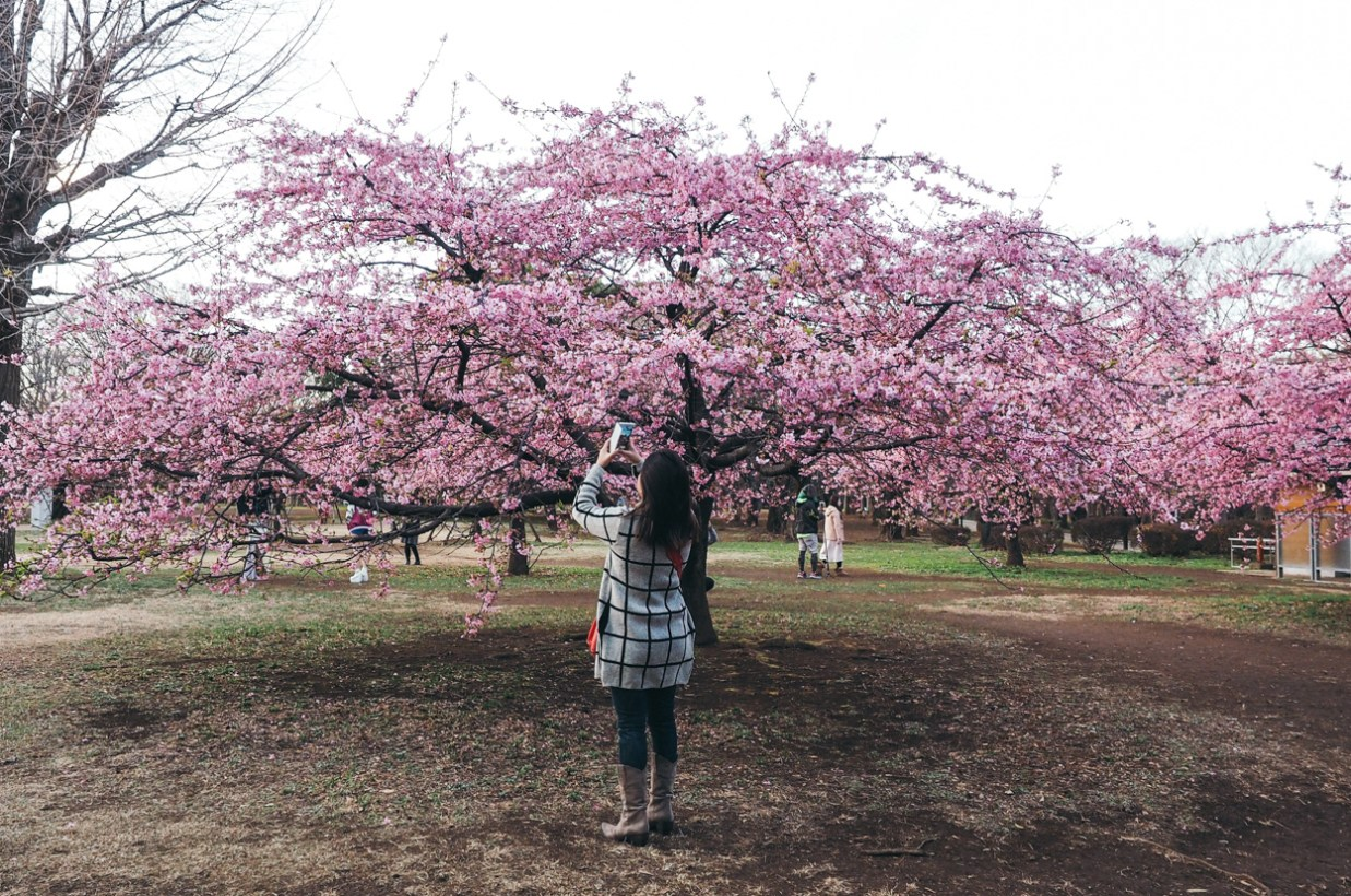 Japan: Harajuku, Yoyogi Park & Nissin Cup Noodle Museum