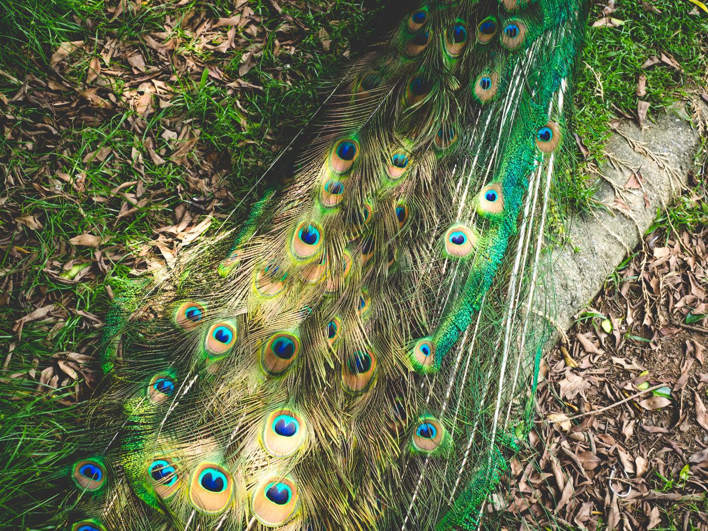 Peacock Garden, Nantou, Taiwan
