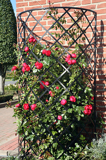 Exedra Wall Trellis Classic Garden Elements Uk