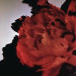 All of Me (John Legend) – Classical Guitar Cover