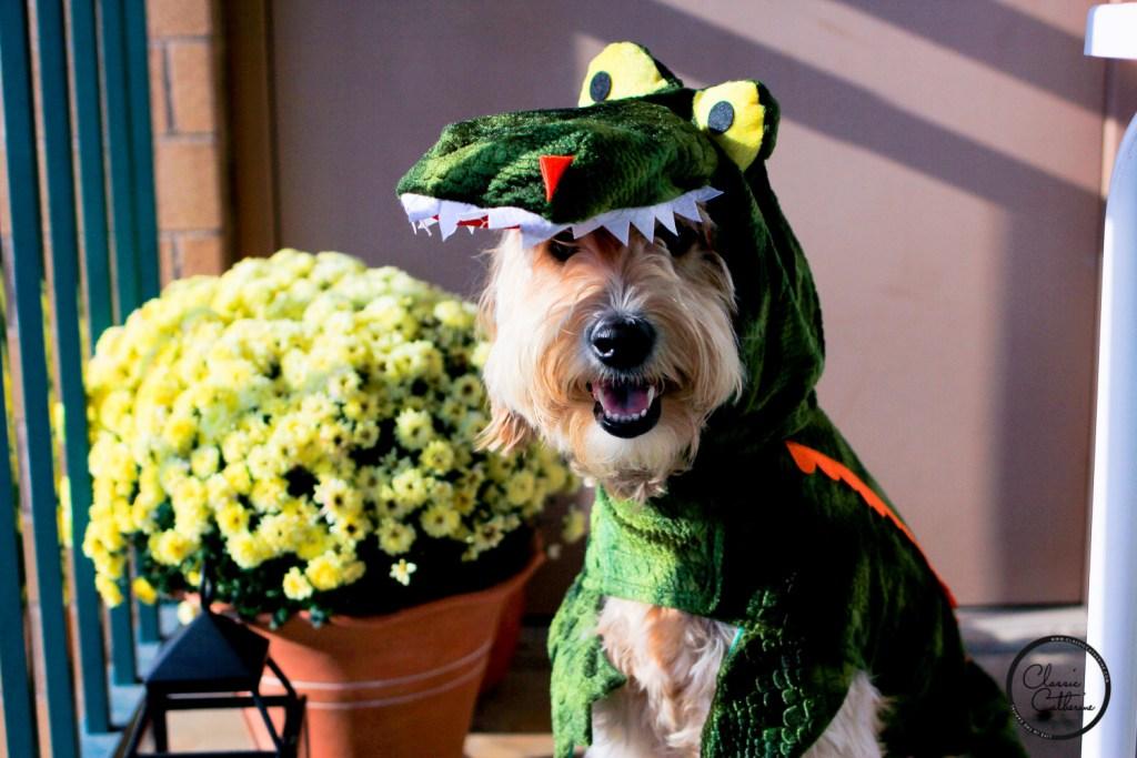 pippa-gator-costume