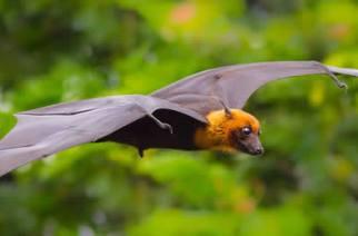 Bats Wreak Havoc In Tanzania's Tourist Town