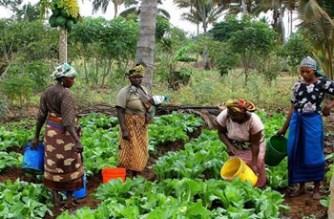 Lack Of Farm Labour Affecting Rural Women Farmers