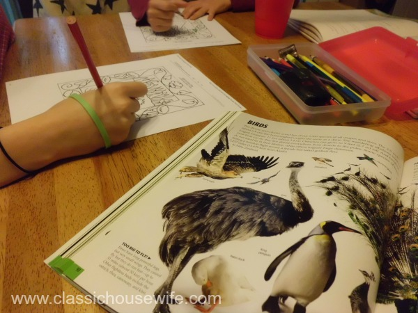 Swan Lake Science Studying Birds