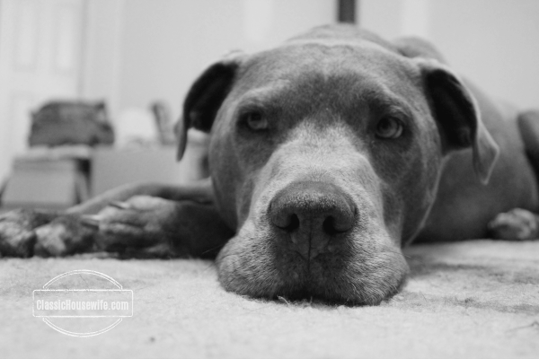 """Mouse"" on a Rug. Taking pictures of pets is a good way to practice. --Arielle, Canon Rebel"