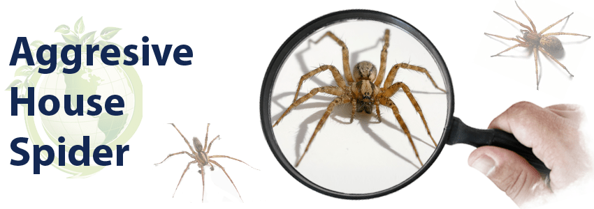 Getting Rid of Spiders in Your House এর ছবির ফলাফল