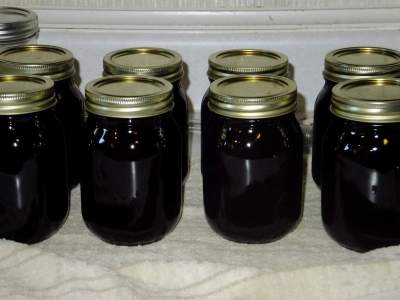 elderberry jelly cooling
