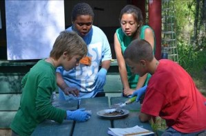 """4-H youth explore the environment at the Sacramento 4-H """"On the Wild Side"""" Environmental Education Camp"""