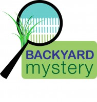 Backyard_Mystery_Photo