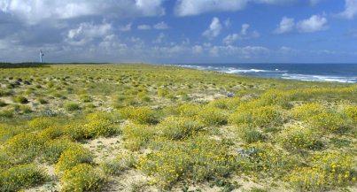 Sommet de la dune à Messanges