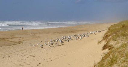 dunes aquitaine