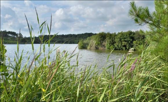 L'étang de Moïsan à Messanges