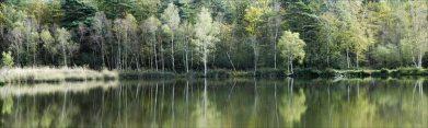 L'étang de Chenay ( Marne )