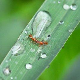 duo de fourmis
