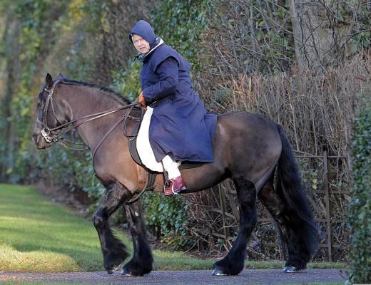 Rainha Elizabeth do Reino Unido, veste uma capa azul com capuz e faz sua montaria, nos campos ingleses, um enorme cavalo castanho escuro da raça percheron,