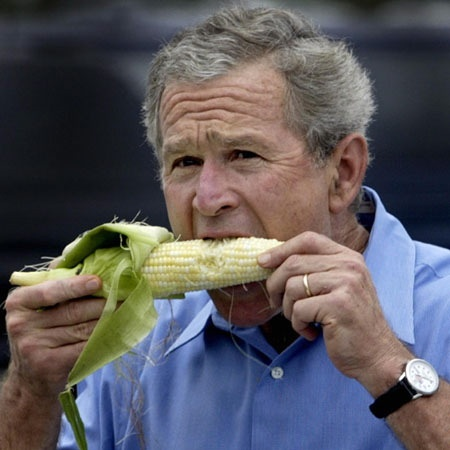 Presidente George W. Bush comendo uma espiga de milho, com as duas mãos, faz um semblante de dificuldade ao comer. usa relógio no braço esquerdo e uma camisa social azul clara.