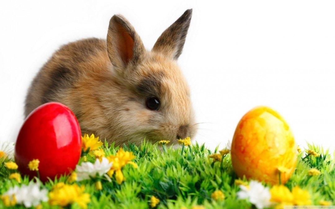 a foto mostra um filhote de coelho marrom claro, em cima de um jardim com 2 ovos coloridos.