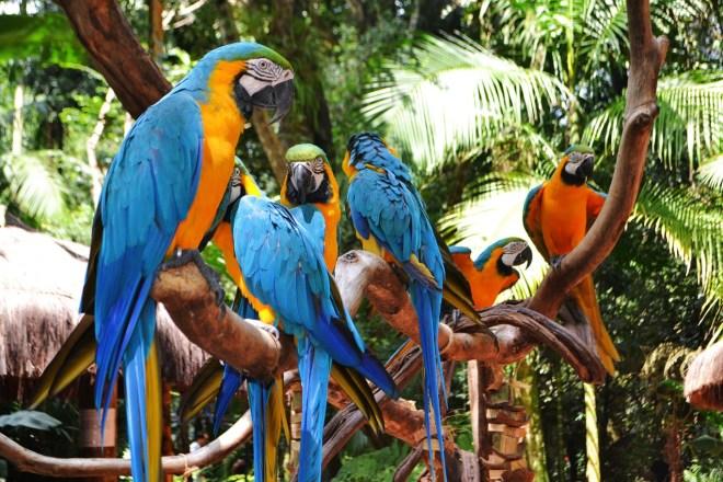 Parque-das-Aves-Araras_claudiamatarazzo