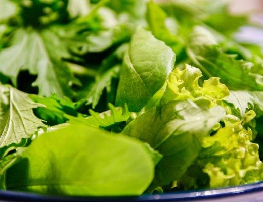 Prato de salada, com muitas folhas de alface lisa e crespa, agrião,