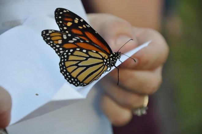 uma mão segura um cartão de papel branco onde está pousada uma borboleta nas cores laranja, tons cremes e preto.