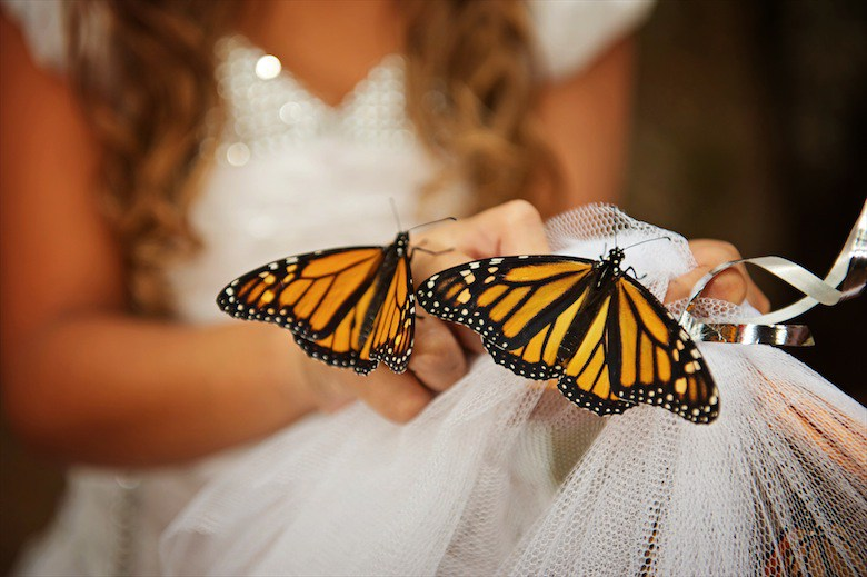 Wedding-Butterflies-Bride_claudiamatarazzo