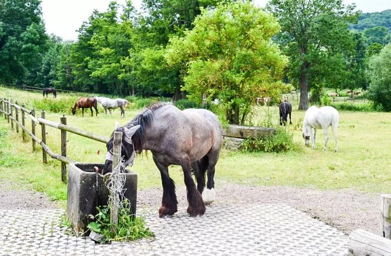 Pferde in Rheinhessen