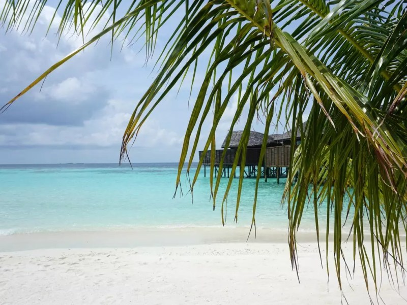 Palme mit Strand