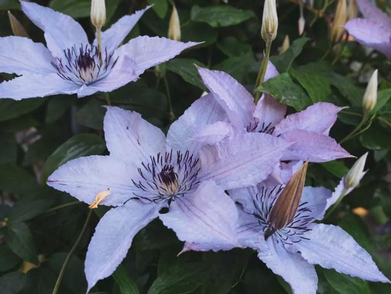 Blumen in Trauttmansdorff