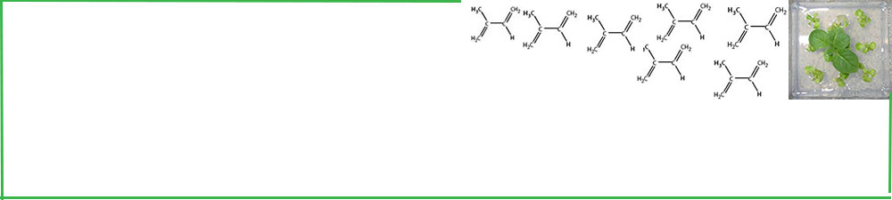 Header showing tissue cultured plant and isoprene molecules