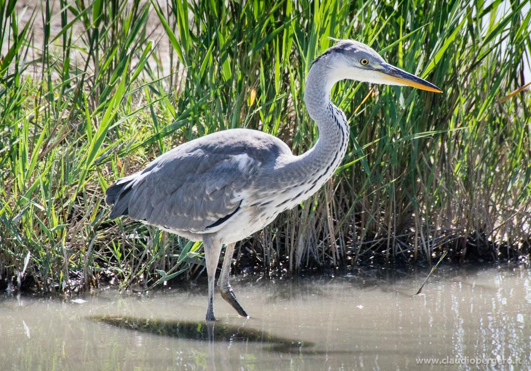 Parco ornitologico Pont de Gau  ClaudioBergeroit