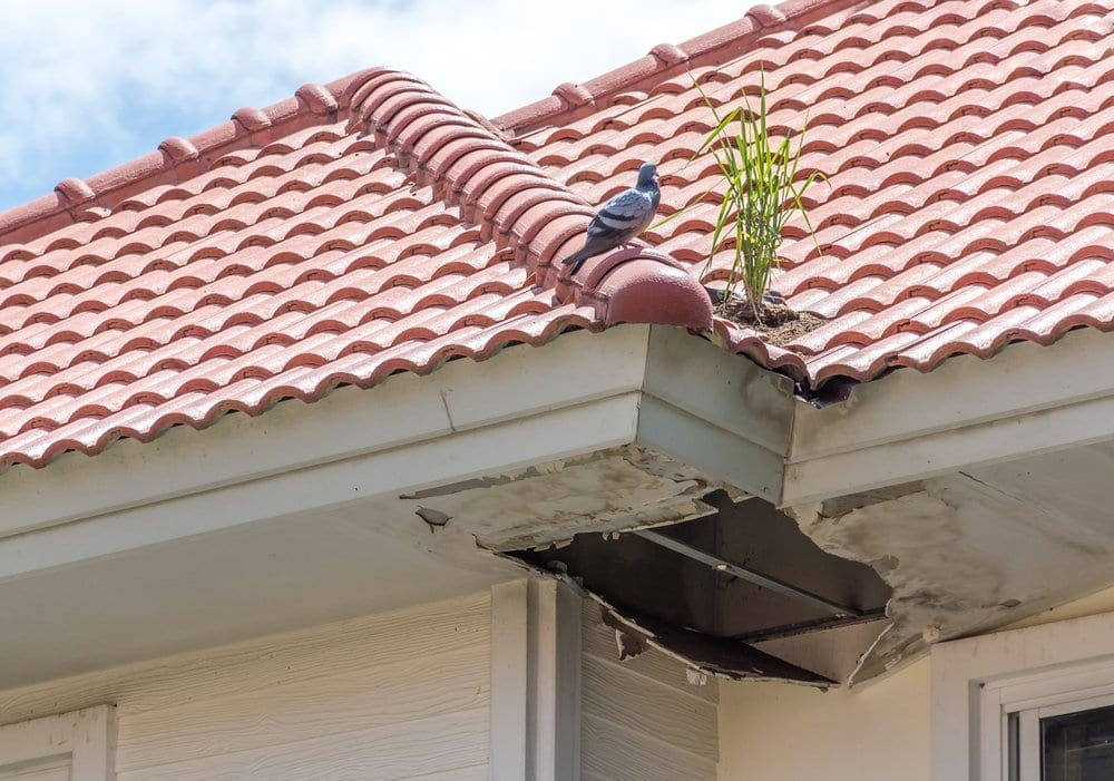 Calgary Roofing Company - Claw Roofing - Tile roof mold damage