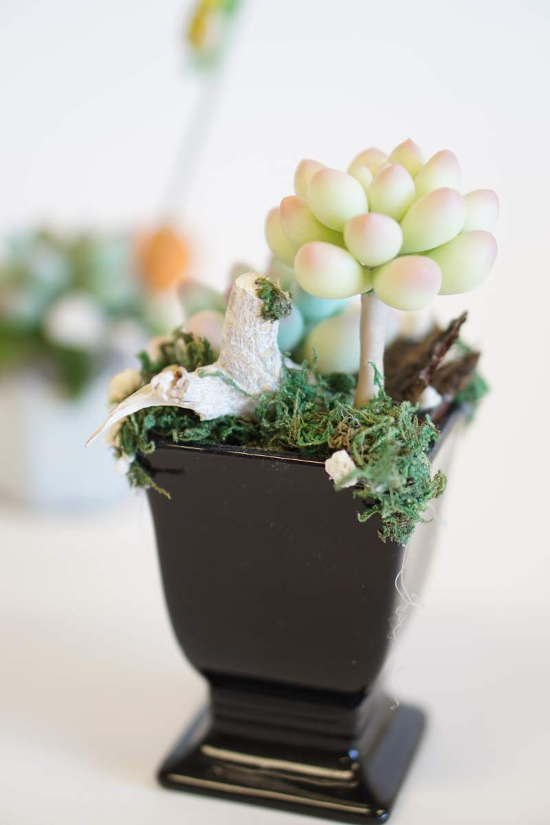 clay magic house_Succulent Plants